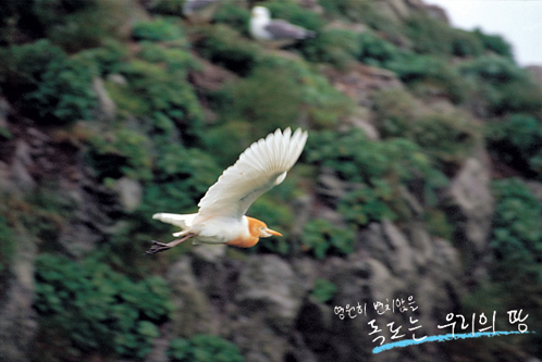Picture of Dokdo10